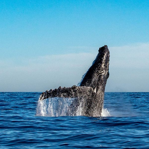 Private Whale Watching Cruise