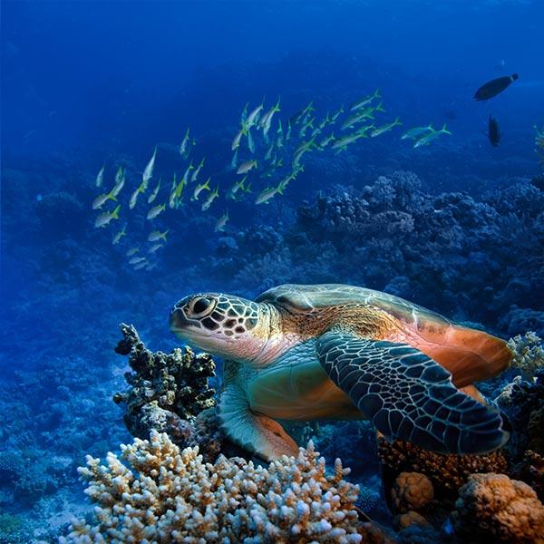 turtle at snorkeling tour in Honoluu